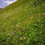 Ahrntal-Sommer-Vegetation